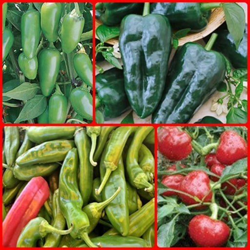 Best Heirloom Hot Pepper Seed Collection Non-GMO Best Selling Open Pollinated  Gifts for Gardeners Gardening