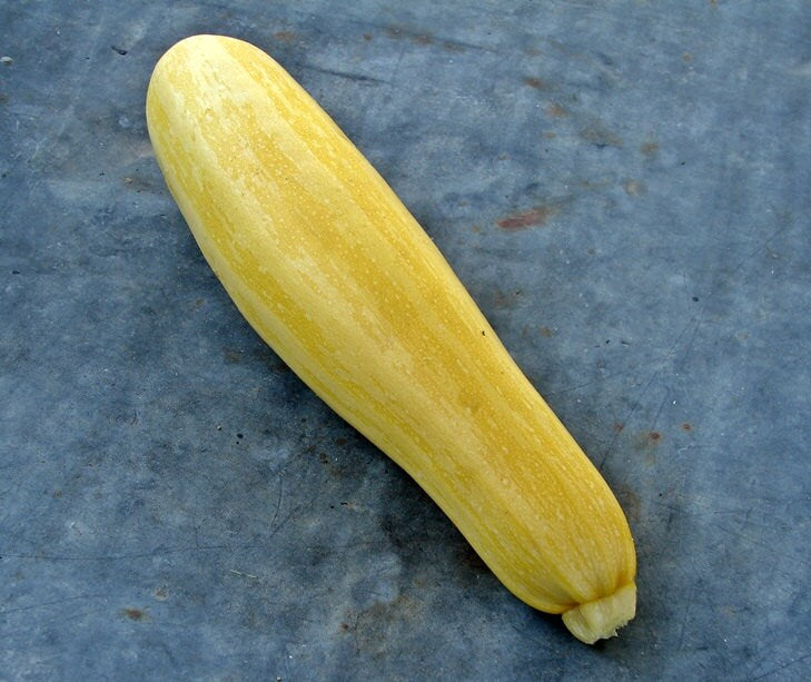 Zucchini Squash Collection Heirloom Garden Seed  Gifts for Gardeners