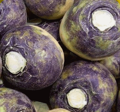 American Purple Top Rutabaga Heirloom Garden Seed Non-GMO - 200+ Seed Swede Cool-weather Crop Vitamin-rich Very Tasty Gardening