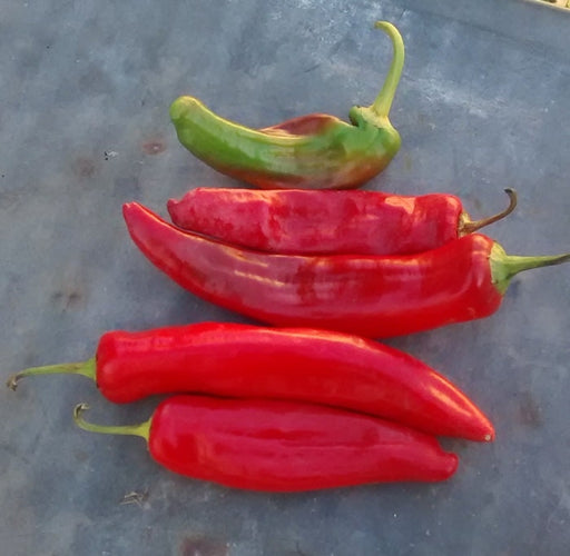 Anaheim Chili Heirloom Pepper Seeds Non GMO Open Pollinated Popular Hot Pepper Tasty 30+ Seeds Used in Salsas Gardening
