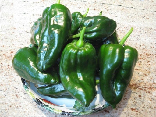 Ancho Grande Pepper Heirloom Garden Seed Non GMO 30+ Seeds Open Pollinated Popular Hot Chilies Mild Heat Gardening