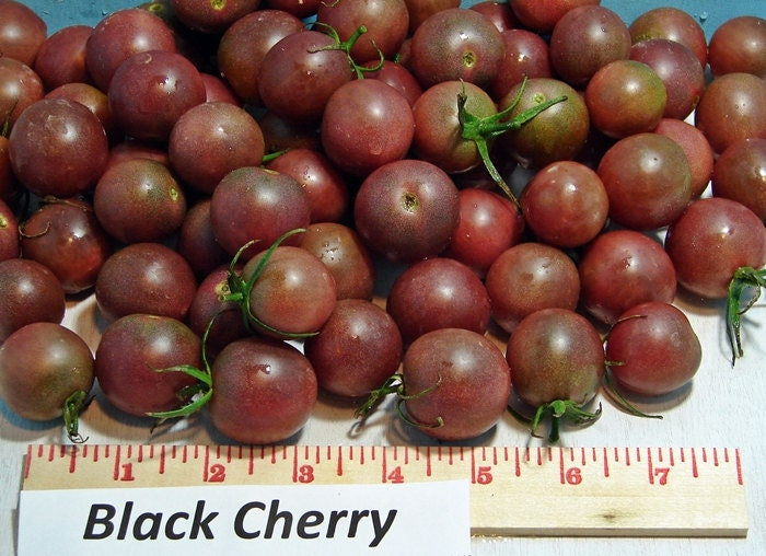Black Cherry Tomato Heirloom Garden Seed Non-GMO 30+ Seeds Grown To Organic Standards Open Pollinated Gardening