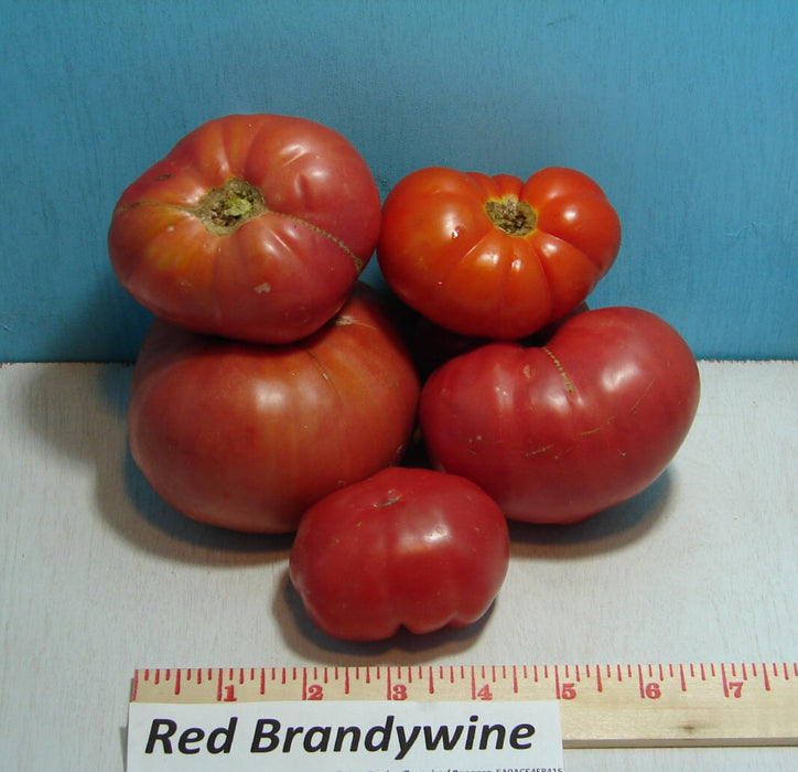 Red Brandywine Tomato Heirloom Garden Seed Non-GMO 30+ Seeds Grown To Organic Standards Open Pollinated Gardening