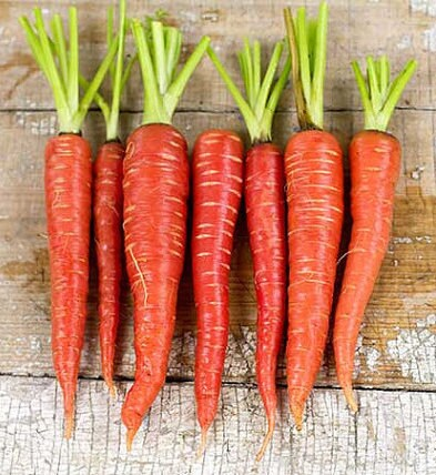 Colorful Carrot Seed Heirloom Collection Non-GMO Gardening Gifts for Gardeners