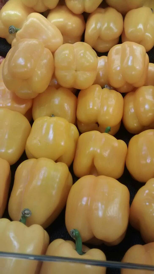 Golden Cal Wonder Pepper Heirloom Garden Seed Non-GMO Naturally Grown Open Pollinated 30+ Seeds Gardening