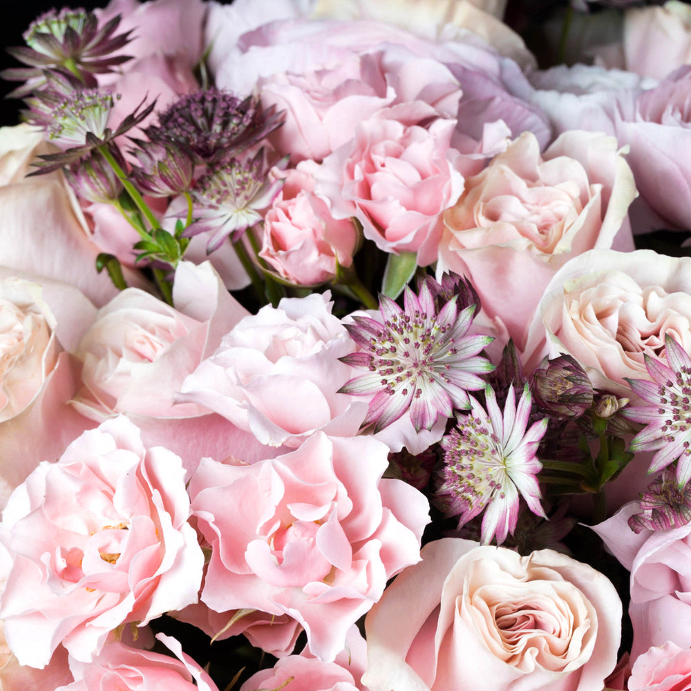 Detail of pink ranunculus, pink mondial roses and pink spray roses paired with astrantia.
