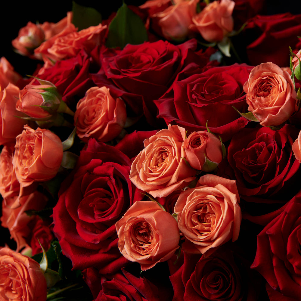 Detail of blend red and orange spray roses.