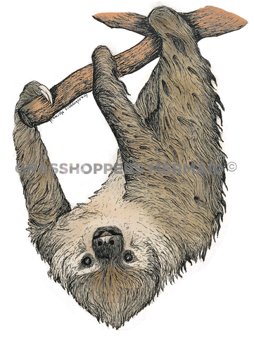 Two-Toed Sloth (#G17)