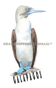 Blue Footed Booby (#U2)