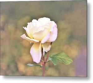 Enchanted Rose - Metal Print