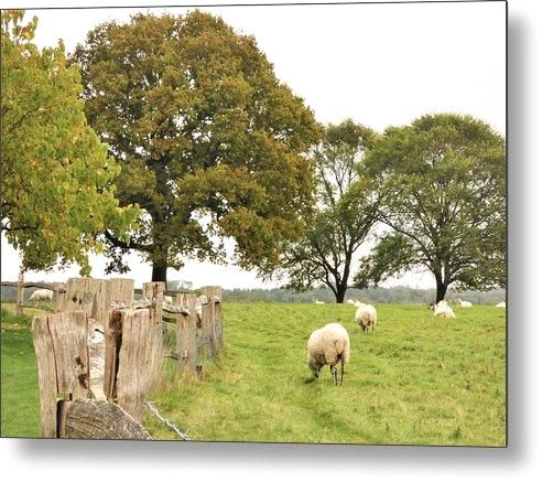 Grazing The Field - Metal Print