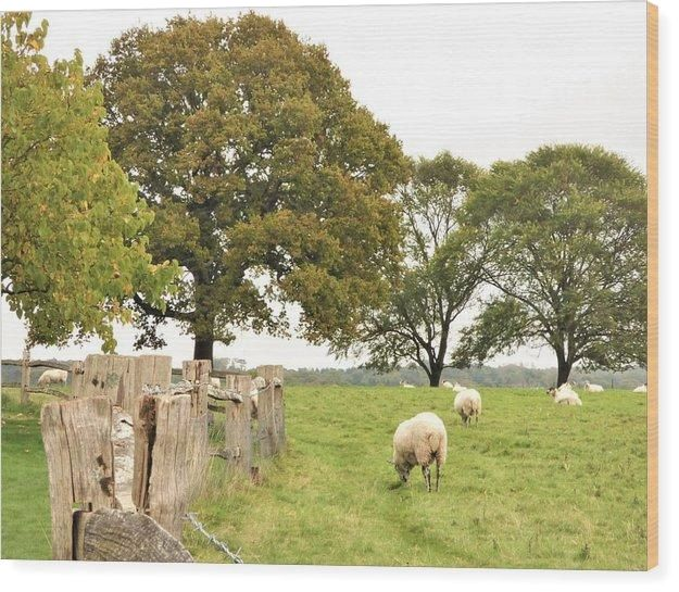 Grazing The Field - Wood Print