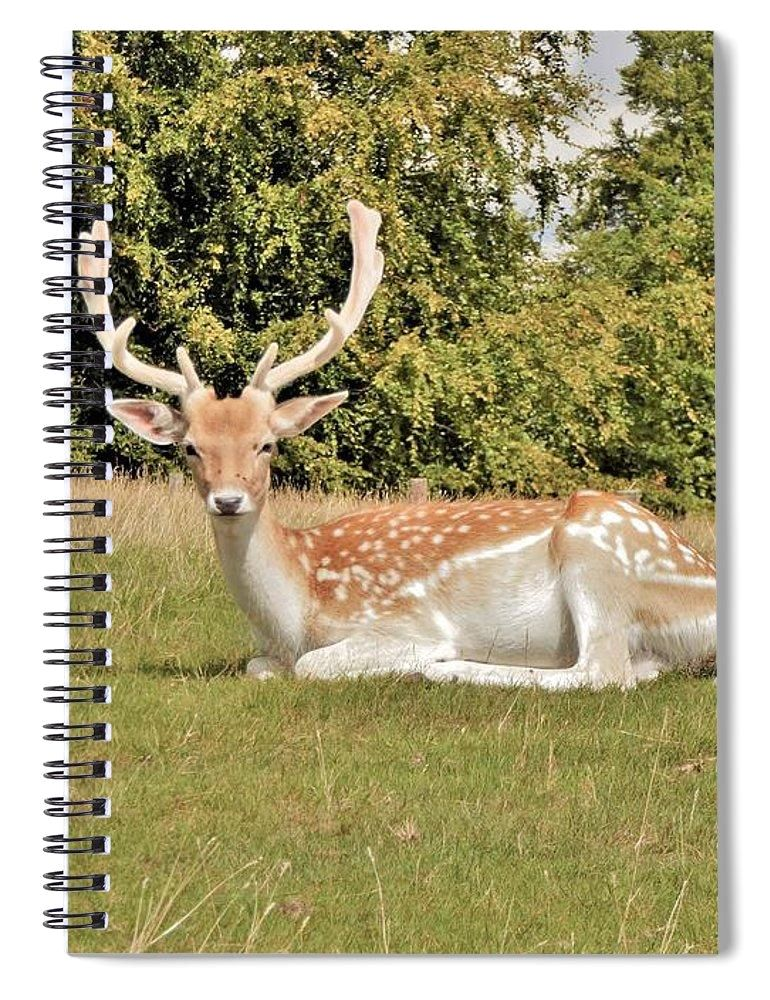 Magical Encounter - Spiral Notebook