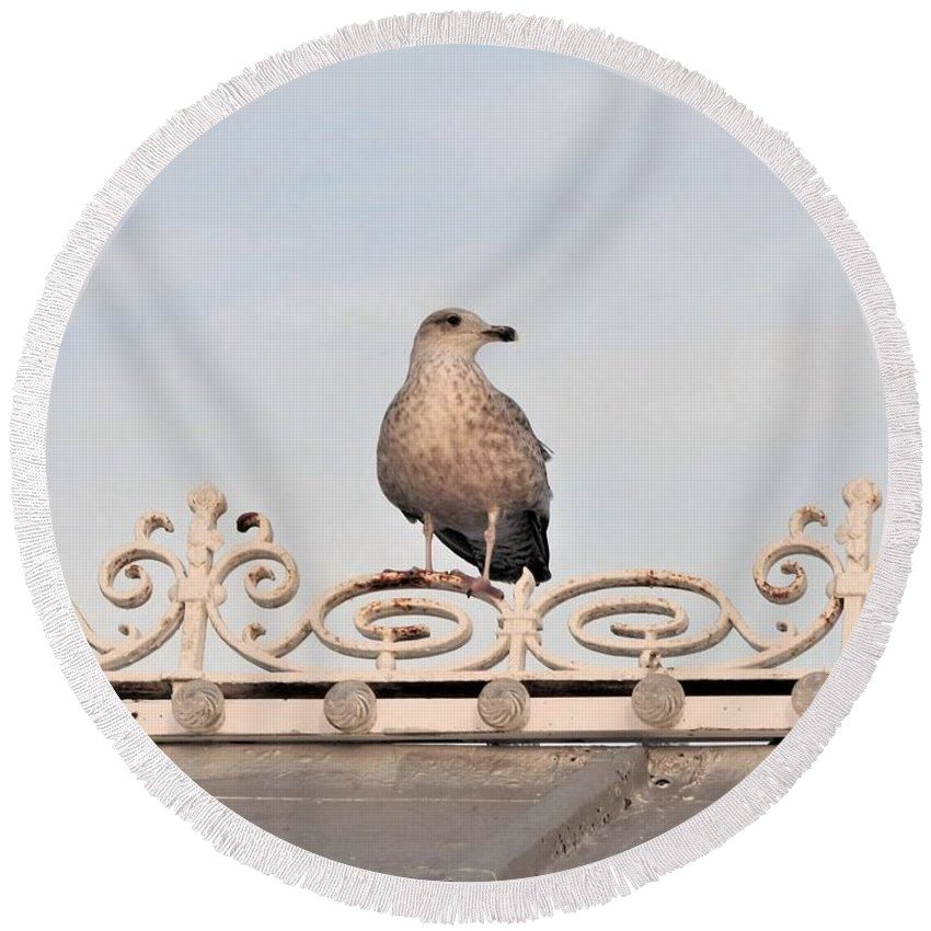 Perched Up High - Round Beach Towel