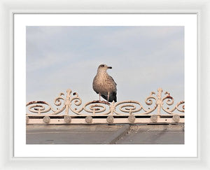 Perched Up High - Framed Print