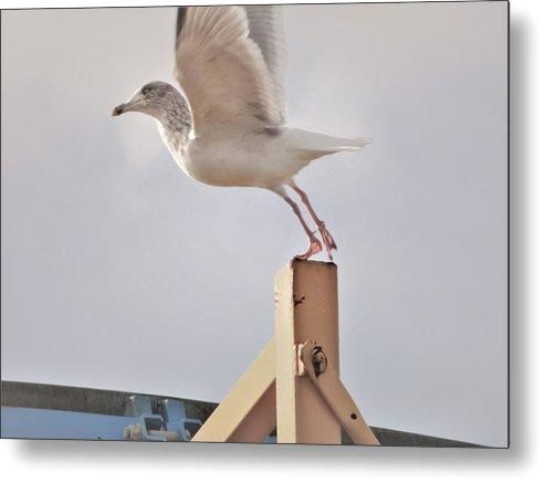 Ready To Fly - Metal Print