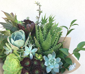Succulent Bunch