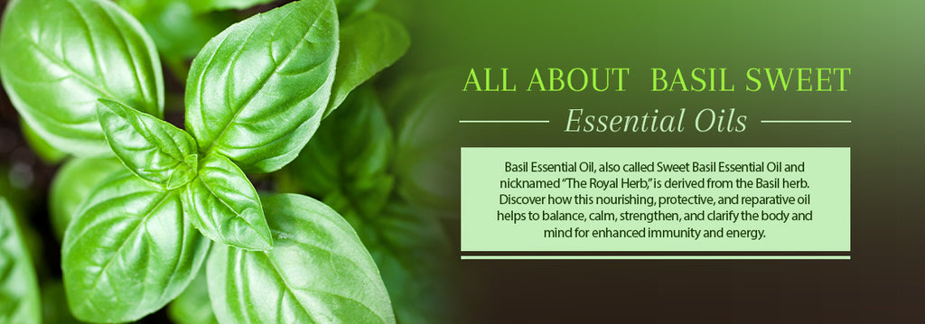 Basil Essential Oil - Uses & Benefits - Essentially You Oils - Ottawa