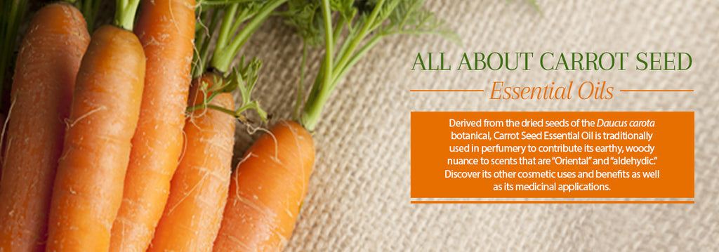 Carrot Seed Essential Oil - Uses & Benefits - Essentially You Oils - Ottawa