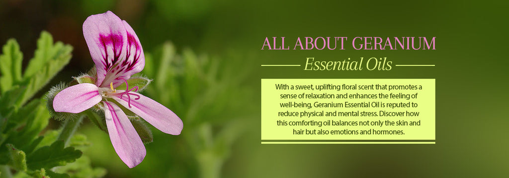 Geranium Essential Oil - Uses & Benefits - Essentially You Oils - Ottawa