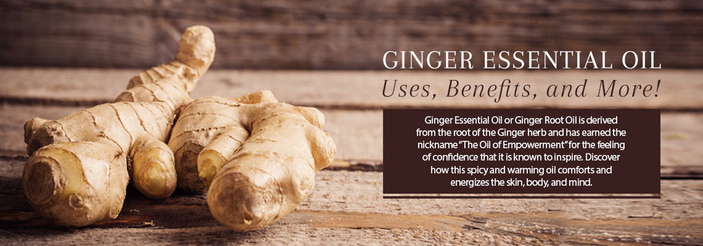 Ginger Essential Oil Uses & Benefits - Essentially You Oils - Ottawa Ontario Canada