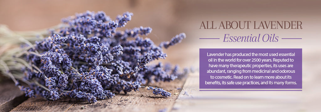 Lavender Essential Oil - Uses & Benefits - Essentially You Oils - Ottawa