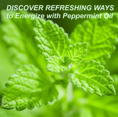 Energize With peppermint Oil Peppermint Essential Oil - Uses & Benefits - Essentially You Oils - Ottawa Canada