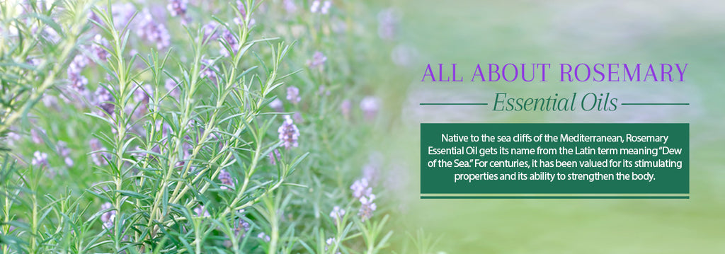 All About Rosemary Oil