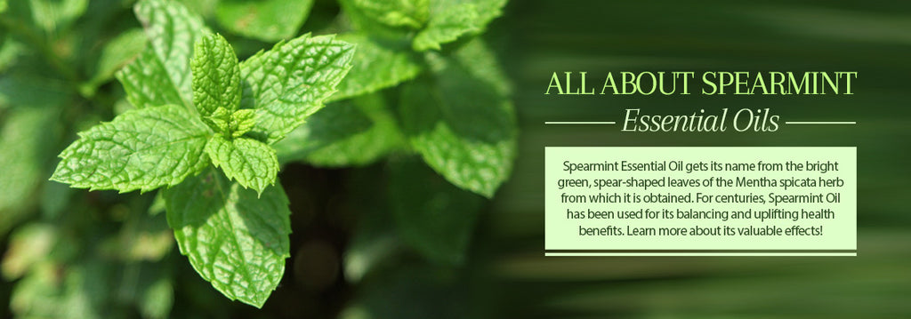 All About Spearmint Oil