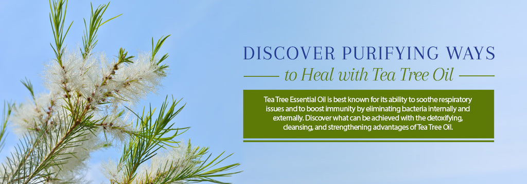 Tea Tree Essential Oil - Recipes, Uses & Benefits - Essentially You Oils - Ottawa Ontario Canada