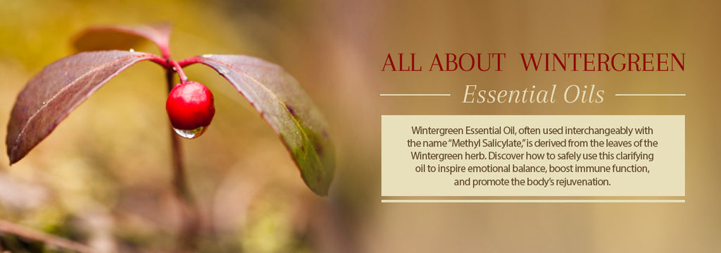 Wintergreen Essential Oil All About