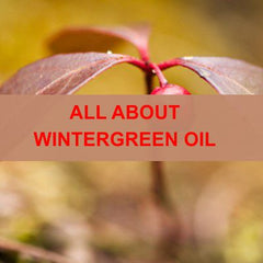 All About Wintergreen Essential Oil Bllog