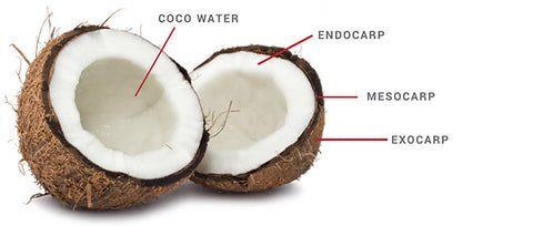 Coconut Parts