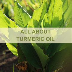 All About Turmeric Oil