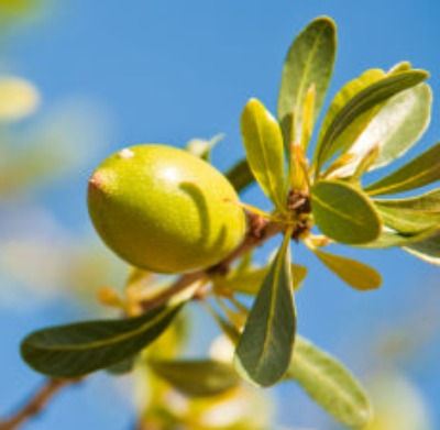 Argan Carrier Oil - Essentially You Oils - Ottawa Canada