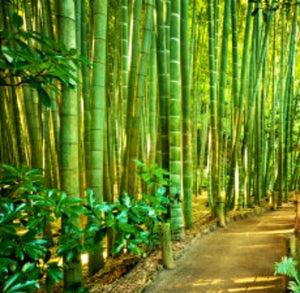 Bamboo & Teak - Fragrance Oil - Essentially You Oils - Ottawa Canada