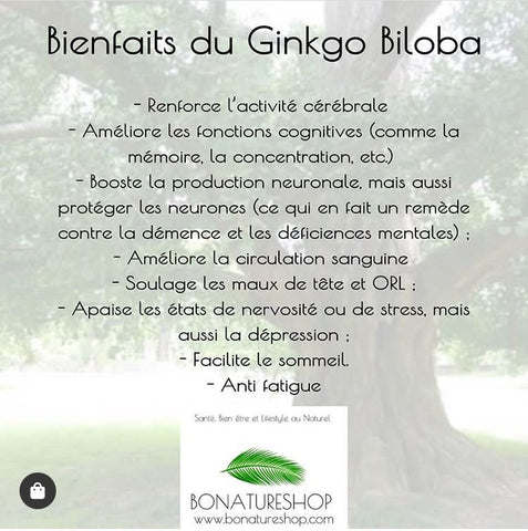 gingko bonatureshop mémoire