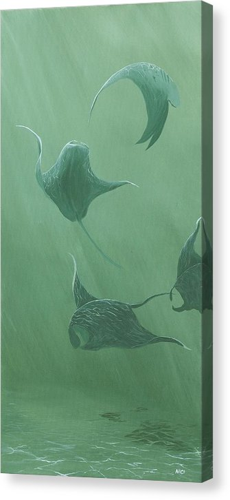 Dancing Manta Rays - Canvas Print
