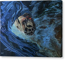 Turtle Surfacing - Canvas Print