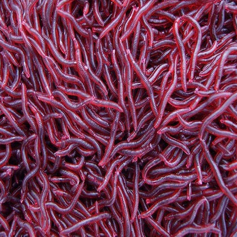 100pcs/lot 4cm Dark Red Fishing Lure Soft Maggot Earthworm Plastic Artficial Bait Bionic Worm Fishy Smell for Fishing Pesca