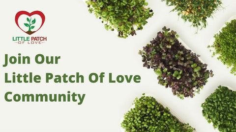 Little Patch Of Love Growing Community