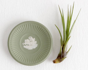 Green Wedgwood Ring Dish with Horses and Chariot Design at Lobster Bisque Vintage