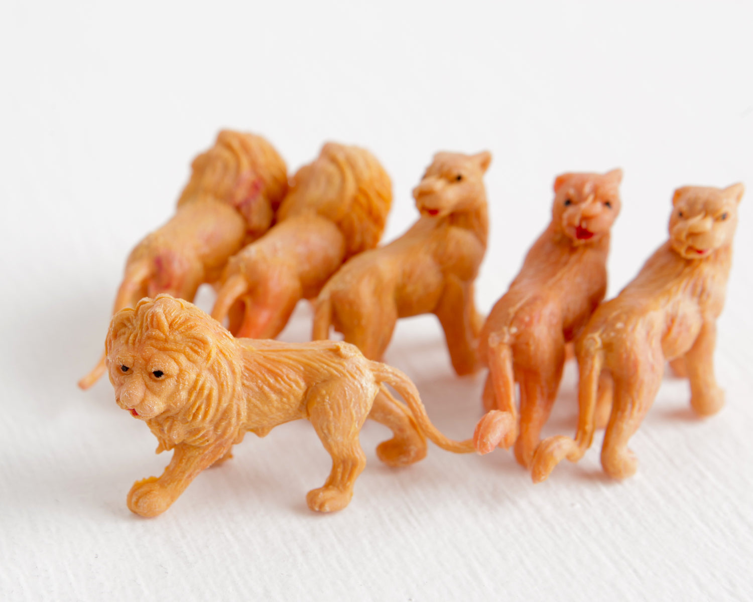 Pride of Six Tiny Lions at Lobster Bisque Vintage