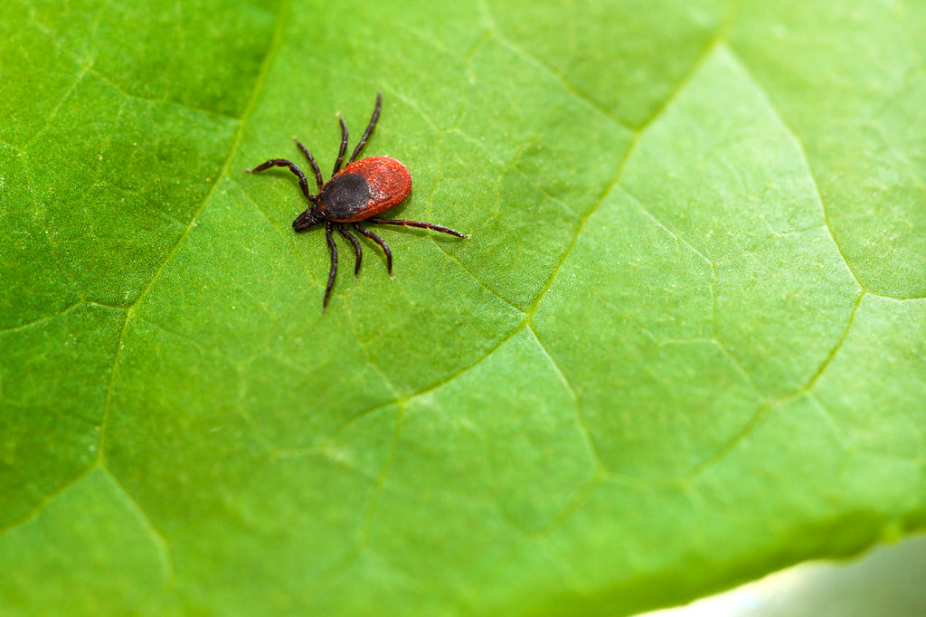 QUICK HEALTH TIPS: Lyme Disease