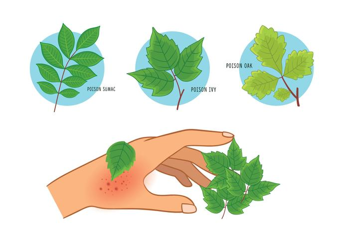 QUICK HEALTH TIPS: Poison Ivy
