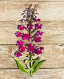 Single Metal Art Fireweed
