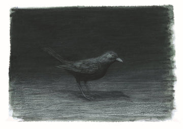 Print 1 - Night Blackbird