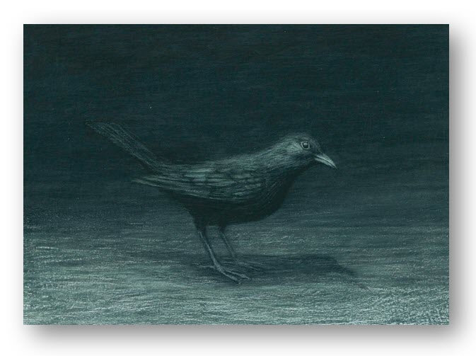 Card 1 - Night Blackbird