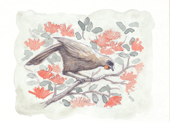 Giclée print - Limited Edition 'South Island Kokako'