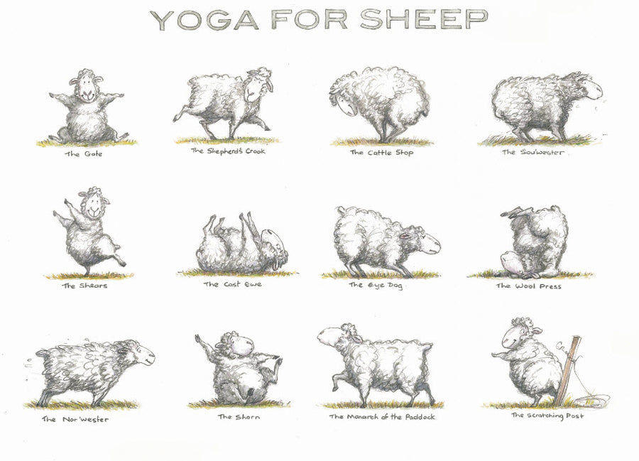 Print 1 - Yoga for Sheep